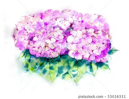 繡球花水彩2 53016331