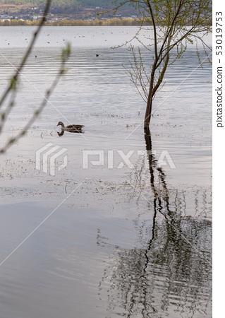 中國雲南麗江拉市海 Scenic Spots in China 國際重要濕地 自然保護區 候鳥 53019753