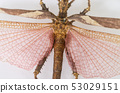 dragonfly isolated closed up on white background 53029151