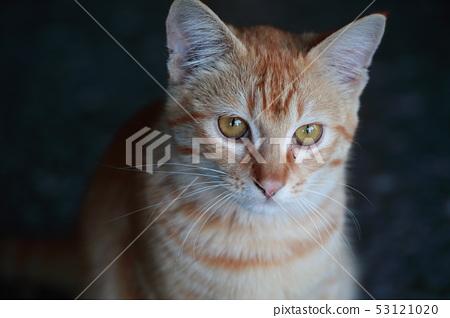 漂亮的猫 53121020