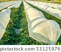 蔬菜田 53125976