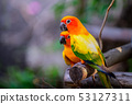 colorful Pair Lovebirds parrots on branch. 53127311