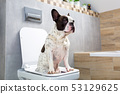 French bulldog sitting on a toilet seat 53129625