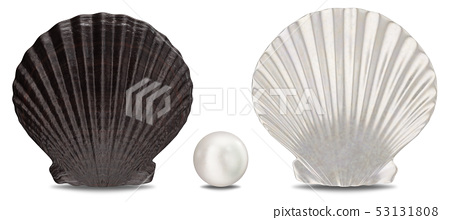Set of pearls, sea shell, inner and outer side isolated on white background with shadow. Sea shell 53131808