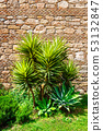 Palm tree in front of the old wall 53132847