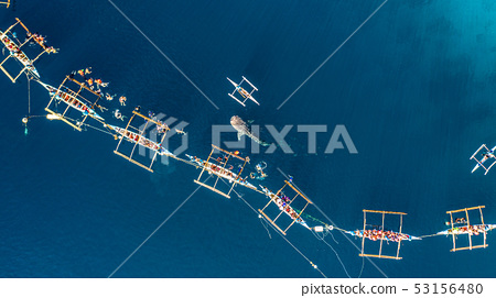 Aerial view Oslob Whale Shark Watching, Fishermen 53156480