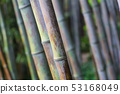 bamboo forest texture close up 53168049