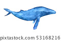 Humpback whale illustration 53168216