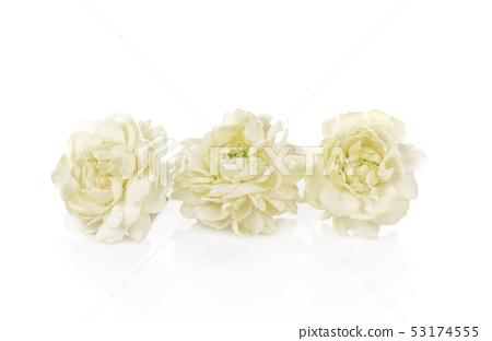 Jasmine Flower Isolated on White Background 53174555