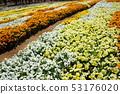 신슈 꽃 축제 2019 53176020