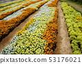 신슈 꽃 축제 2019 53176021