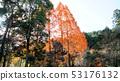 메타세쿼이아 단풍 53176132