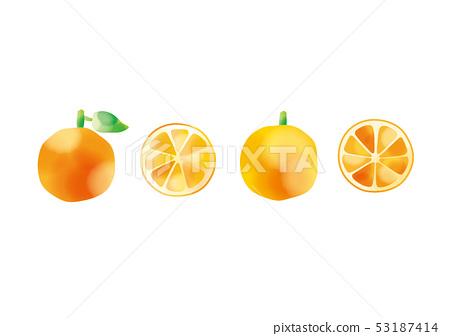 Watercolor orange 53187414