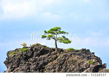 鬼押出し園 용암에 자라는 소나무 53188537