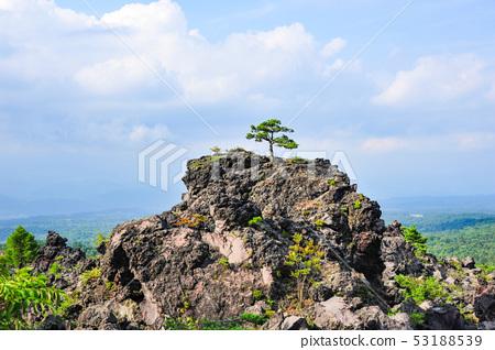 鬼押出し園 용암에 자라는 소나무 53188539