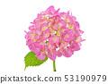 Hydrangea (depth synthesis) 53190979