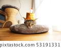 戴着生日帽子的猫 53191331
