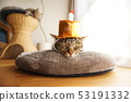생일 머리 장식을하는 고양이 53191332