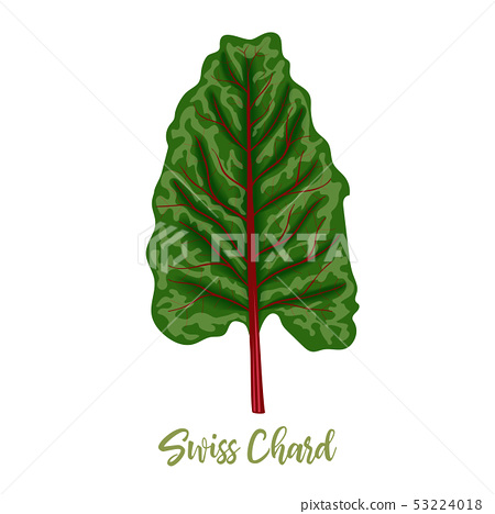 Mangold Or Swiss Chard Rainbow Leaves Isolated Stock Illustration 53224018 Pixta