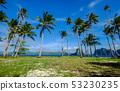 Coconut trees on Coron Island, Philippines 53230235