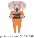 Mugshot prison clothes dog  Weimaraner 53231288