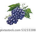 Grapes image painted in watercolor. 53233388