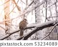 grey pigeon bird sitting alone on a no leaf tree 53234089