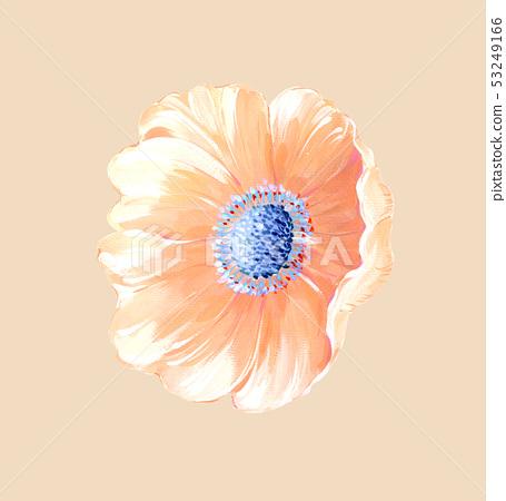美麗的水彩玫瑰花和牡丹花 53249166