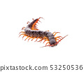 centipede an isolated on white background 53250536