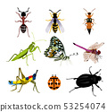 Set of many beautiful insects on a white 53254074