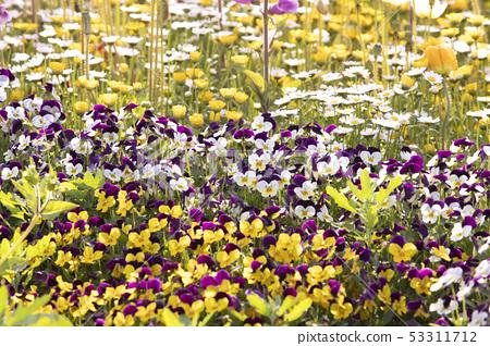꽃들이 만발한 정원 53311712