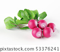 A bunch of fresh radishes with leaves isolated on 53376241