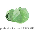 fresh green cabbage isolated on white 53377501