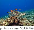 Sea turtle 53432364