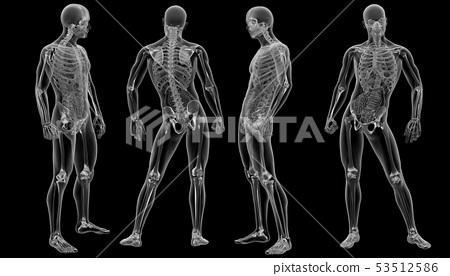 3d rendering illustration of human 53512586