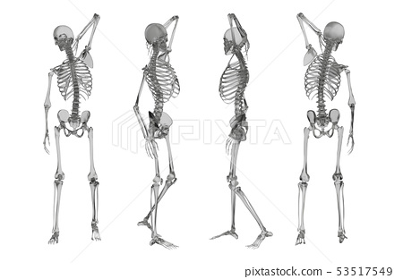 3d rendering illustration of skeleton 53517549