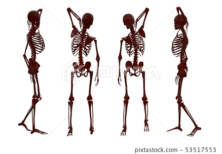 3d rendering illustration of skeleton 53517553