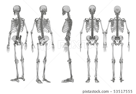 3d rendering illustration of skeleton 53517555