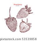 Set of strawberry. Vector hand drawn illustration 53539858