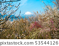 Plum and Mt. Fuji 53544126