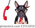 business boss dog 53553656