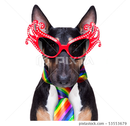 gay pride dog 53553679