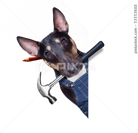 handyman  dog with tool in mouth 53553688