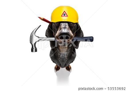 handyman worker hammer dog with helmet 53553692