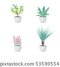 Vector Illustration. Set of Plants in pot 53590554