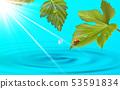 树叶 水 瓢虫 53591834