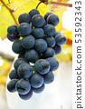 新鲜葡萄-水果 53592343