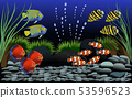 Many beautiful fish in  fish tank with gravel  53596523