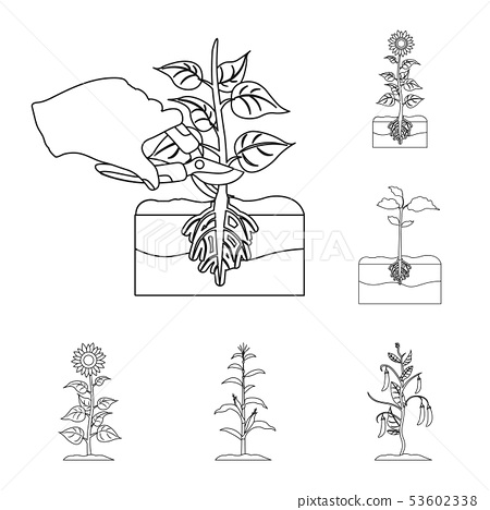 Isolated object of plant and bean logo. Collection of plant and process vector icon for stock. 53602338