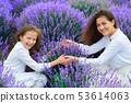 girls are in the lavender flower field, beautiful 53614063